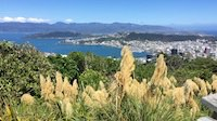 Wellington from Tinakori Hill